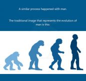 For Those Who Believe Humans Evolved From Monkeys