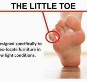 Even The Little Toe Has A Purpose