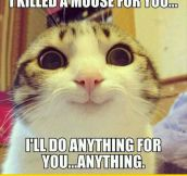 Overly Attached Pet