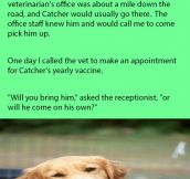 Golden Retriever Catcher Often Ran Away. Usually At The Veterinarian's Office.