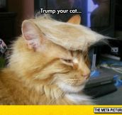 I Would Vote For This Cat Before Donald