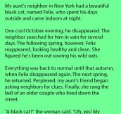 A Woman's Cat Kept Disappearing At Certain Time. She Was In For A Surprise.