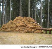 Nice Woodpile