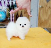 Tiny Cotton Ball