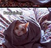 Five Stages Of A Cat Stuck In A T-Shirt