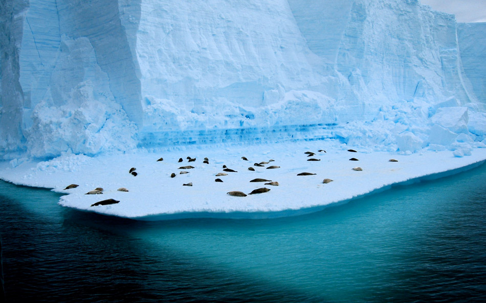 antarctica14 Stunning Photographs Capturing the Beauty of Antarctica