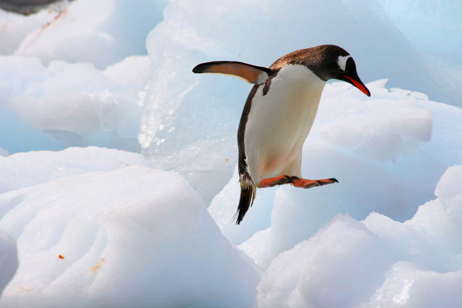 antarctica22 Stunning Photographs Capturing the Beauty of Antarctica