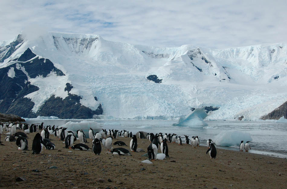 antarctica32 Stunning Photographs Capturing the Beauty of Antarctica