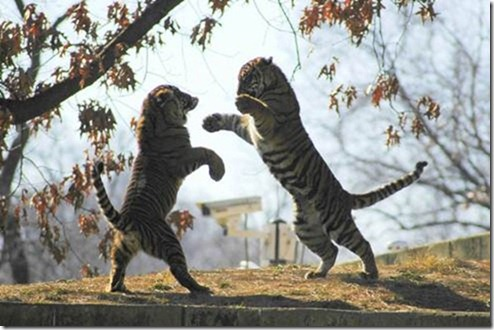 clip image0156 thumb 20 Perfectly Timed Photos of Animals Fighting