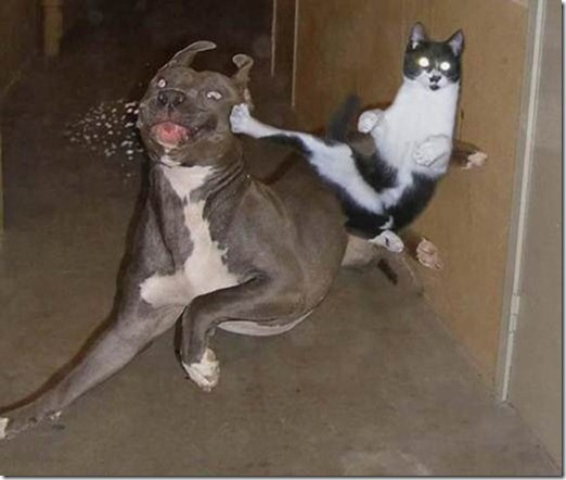 clip image0274 thumb 20 Perfectly Timed Photos of Animals Fighting