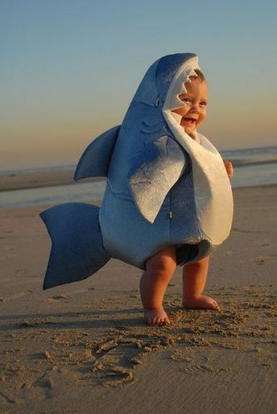cutest shark ever Cutest Shark Ever