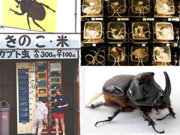 vending machine bugs 10 Vending Machines that Carry Unusual Things
