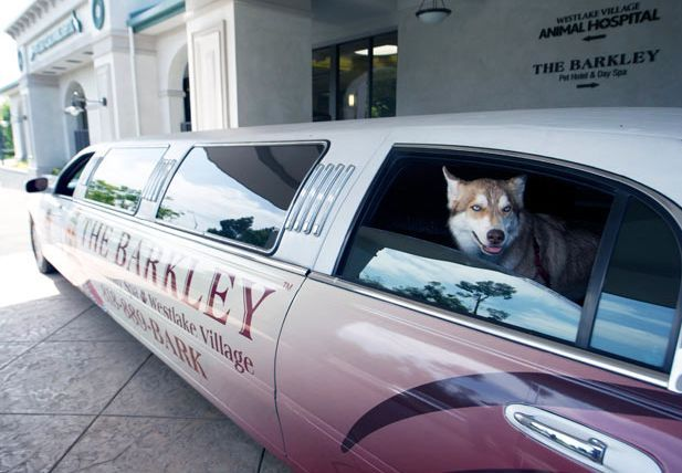 Barkley Dog Hotel California 12 Weird Places: The Barkley Luxury Pet Hotel in California