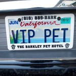 Barkley-Dog-Hotel-California-13