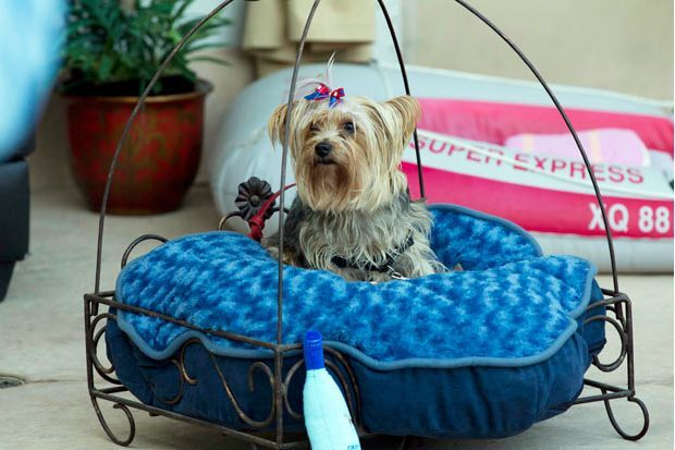 Barkley Dog Hotel California 14 Weird Places: The Barkley Luxury Pet Hotel in California