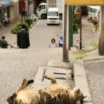 Just fell asleep on the street