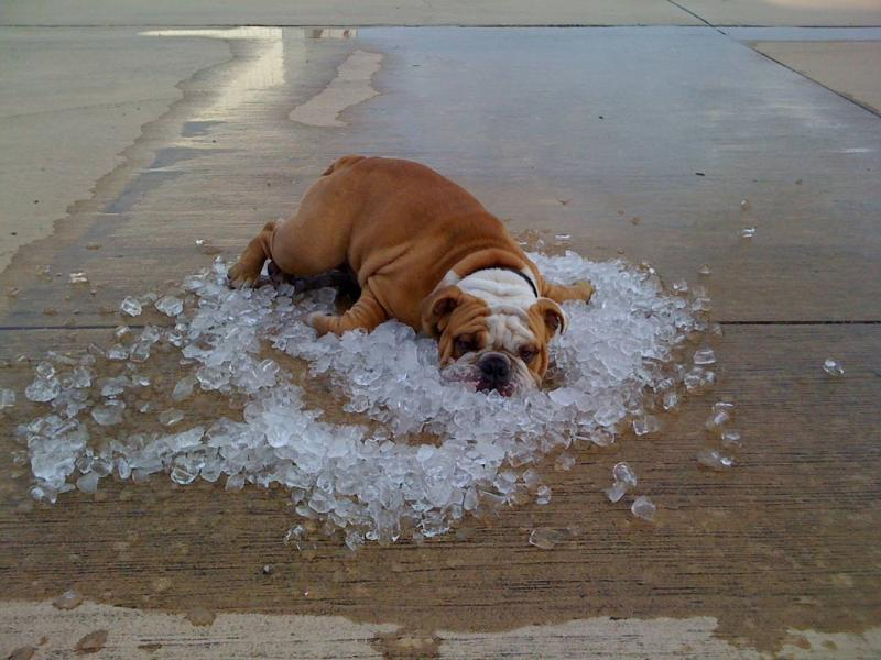 You know it is hot when...