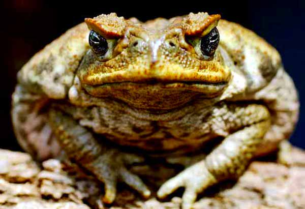exploding toad 10 Cruel Examples of People Making Animals Explode