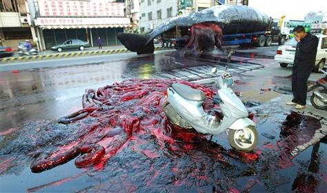 exploding whale1 10 Cruel Examples of People Making Animals Explode