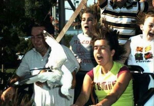 People From Roller Coasters ThumbPress 40
