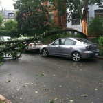 You lucky, lucky bastard (Hurricane Irene edition)