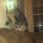 Laser Cat