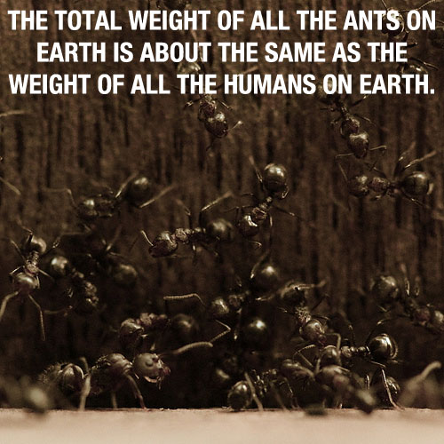 Ants 20 Mind Blowing Facts You Probably Didnt Know