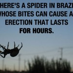 Brazil-Spider