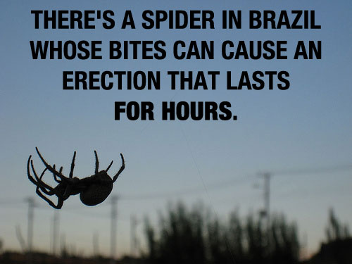 Brazil Spider 20 Mind Blowing Facts You Probably Didnt Know