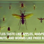 Insects-Taste