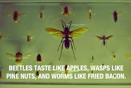 Insects Taste 20 Mind Blowing Facts You Probably Didnt Know