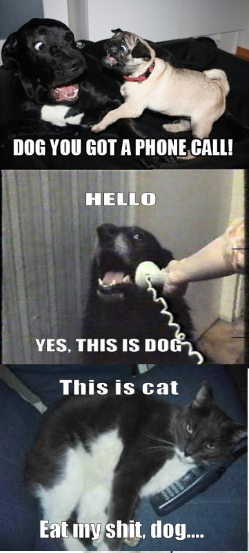YES-THIS-IS-DOG-1