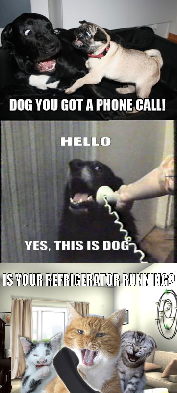 YES-THIS-IS-DOG-2