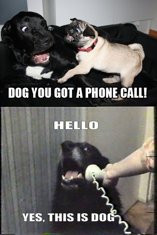 yes dog meme - photo #4