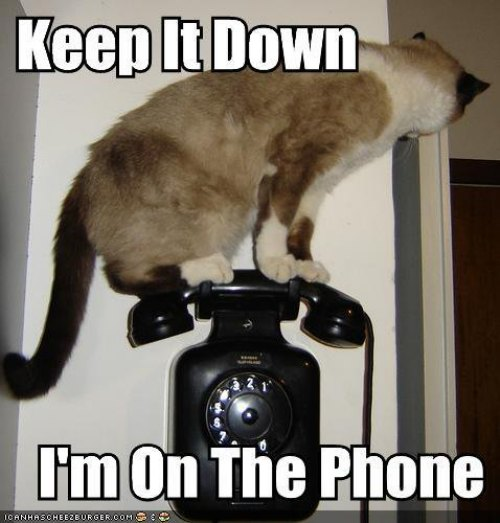 keep it down on the phone