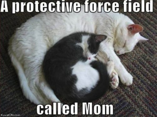 Cute funny animal pictures free