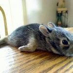 Bunny Planking