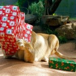 Cute Christmas Animals 01