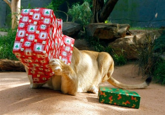 Cute Christmas Animals 01 55 Pictures of Funny Animals Cutely Enjoying Christmas