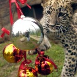 Cute Christmas Animals 02