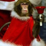 Cute Christmas Animals 03