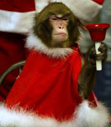 Cute Christmas Animals 03 55 Pictures of Funny Animals Cutely Enjoying Christmas