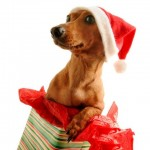 Cute Christmas Animals 05