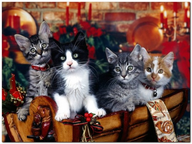 Cute Christmas Animals 06 630x475 55 Pictures of Funny Animals Cutely Enjoying Christmas