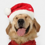 Cute Christmas Animals 08