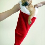 Cute Christmas Animals 10