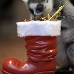 Cute Christmas Animals 11