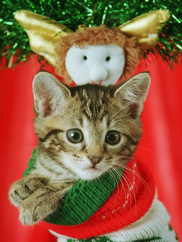 Cute Christmas Animals 13 55 Pictures of Funny Animals Cutely Enjoying Christmas