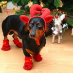 Cute Christmas Animals 14