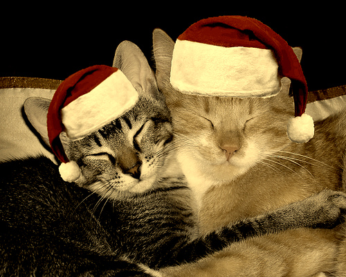 Cute Christmas Animals 15 55 Pictures of Funny Animals Cutely Enjoying Christmas